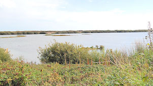 RSPB Dungerness